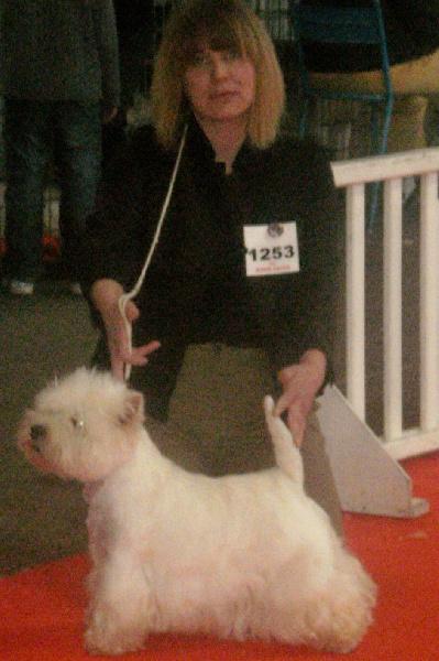 Les West Highland White Terrier de l'affixe du clos des galinettes