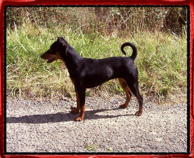 Accueil - Elevage Della Passionata - eleveur de chiens
