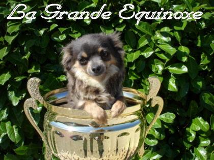 Les Chihuahua de l'affixe de la grande equinoxe