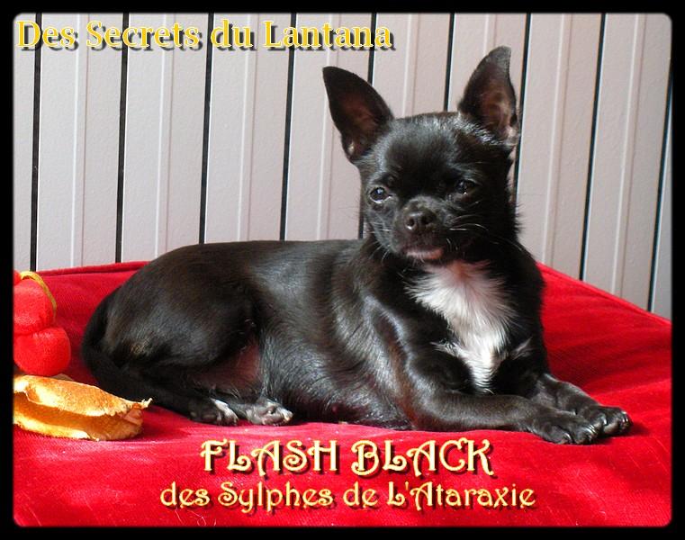 Flash black Des Sylphes de l'Ataraxie