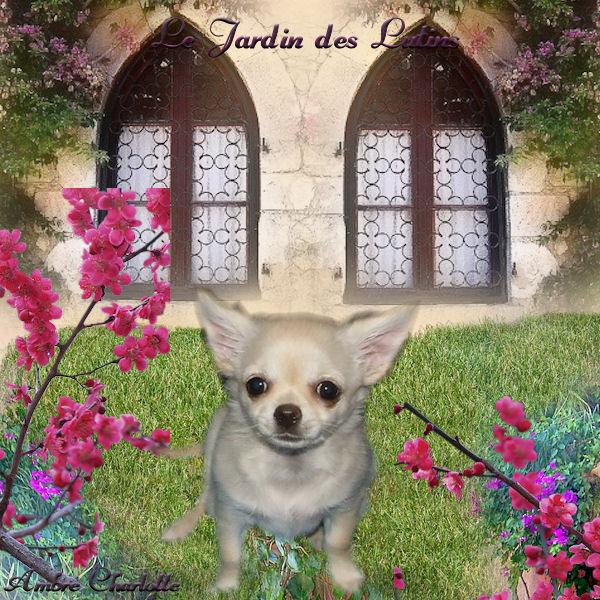 filigane du jardin des lutins chien de race toutes races en tous departements france inscrit sur. Black Bedroom Furniture Sets. Home Design Ideas