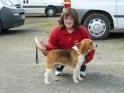 Le Standard de la race Beagle sur Atara.com