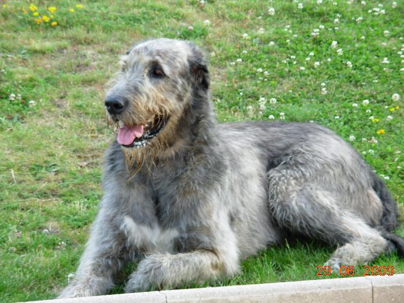 Site de rencontre propriétaire de chien