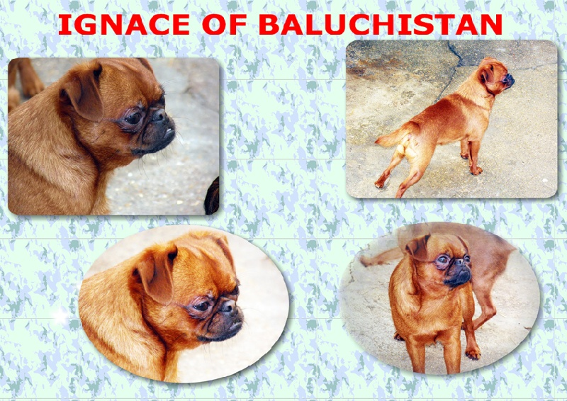 Ignace Of baluchistan