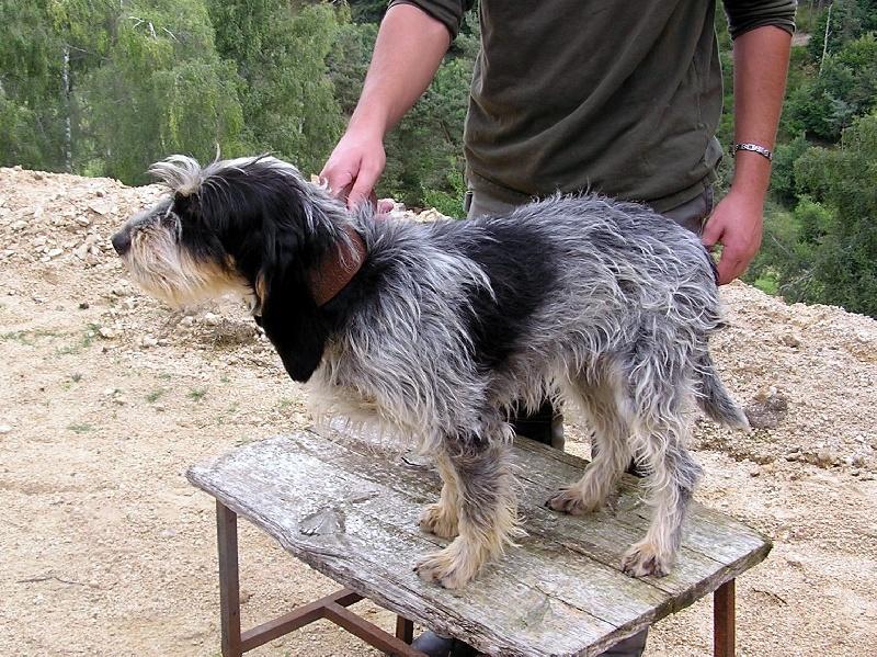 Ecosse de la vall e d 39 arcomie chien de race toutes races - France bleu gascogne grille des programmes ...