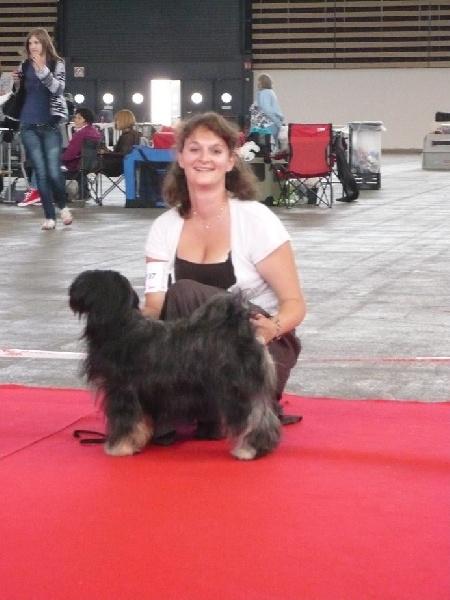 Le Standard de la race Terrier tibetain sur Atara.com