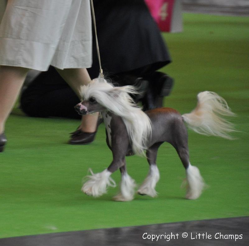 Godiva Little Champs