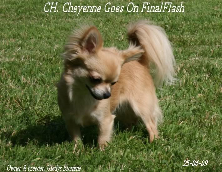 CH. cheyenne goes on Finalflash