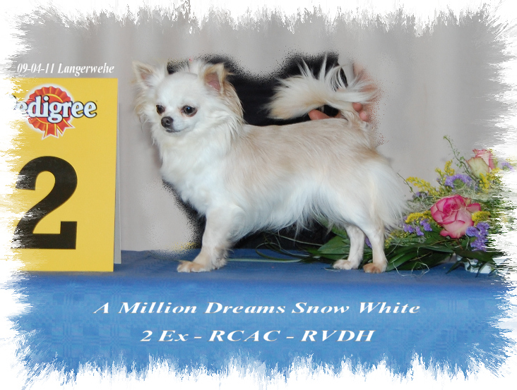 CH. a million dreams Snow white