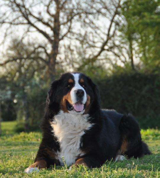 darwin sans affixe chien de race toutes races en tous departements france inscrit sur chiens. Black Bedroom Furniture Sets. Home Design Ideas