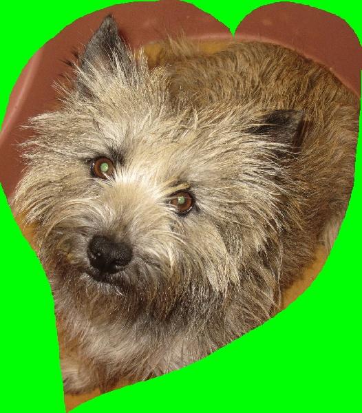 Les Cairn Terrier de l'affixe La Pouponnerie, Elevage Du Pre Moussey