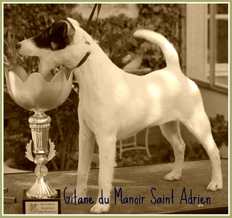 Publication : du Manoir Saint Adrien  Auteur : Magali BRETON