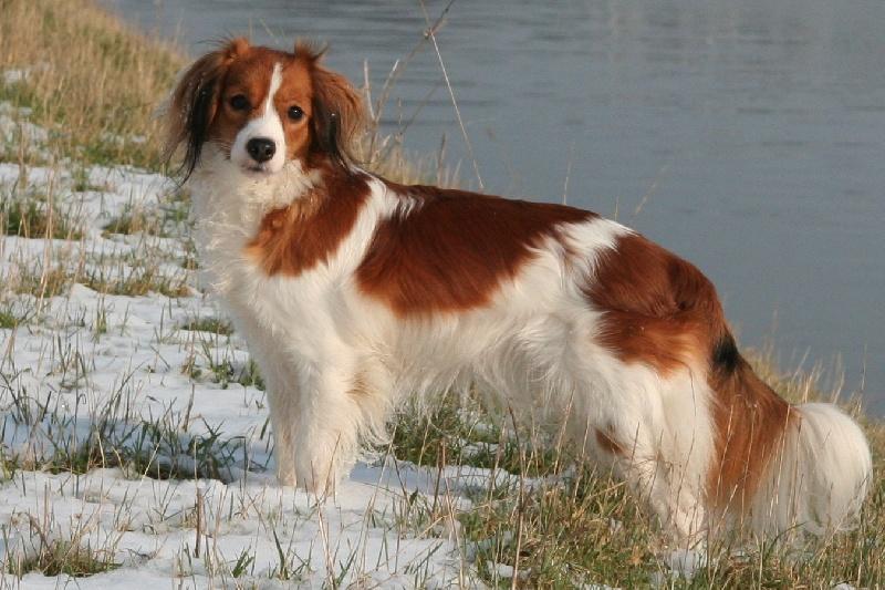 cairnbraid Hinyala chien de race toutes races en tous