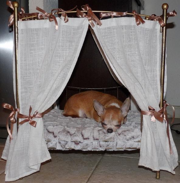 Les Chihuahua de l'affixe du voile d'argent
