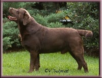 CH. huntmor Bella mare most wanted