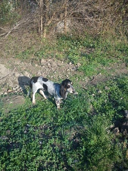 Girul les hortes du riberal chien de race toutes races en - France bleu gascogne grille des programmes ...