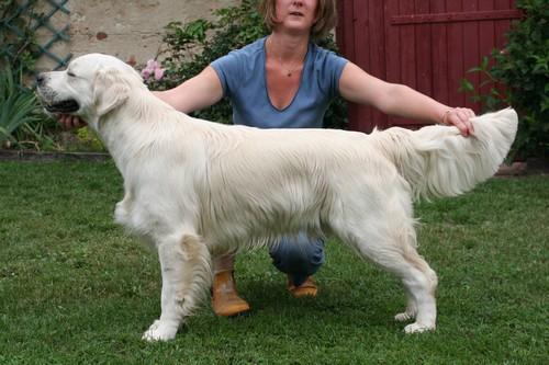 Chien - Elevage Of glen sheallag - eleveur de chiens
