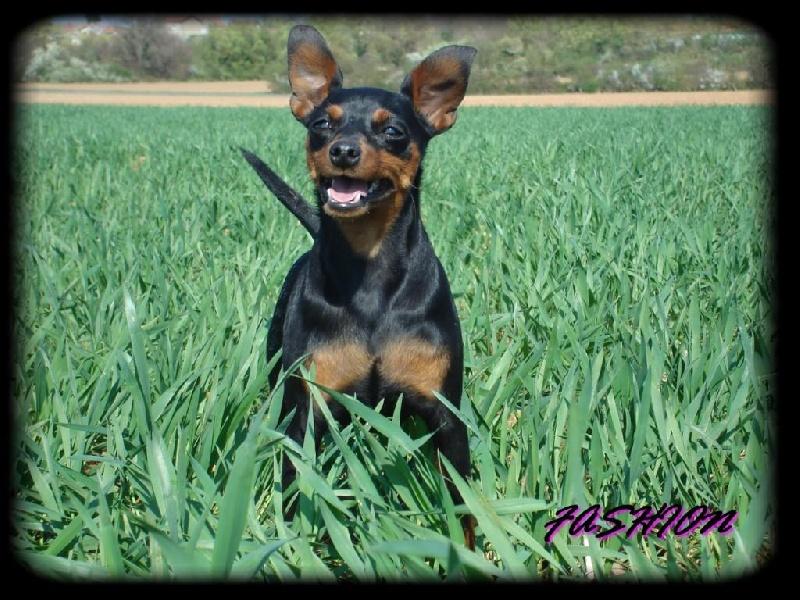 Accueil - La Garde Divine - eleveur de chiens American