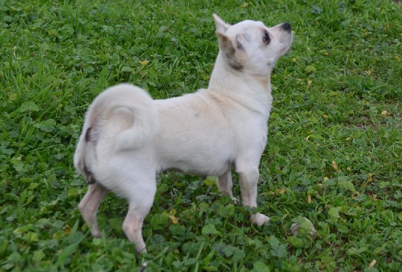 Les Chihuahua de l'affixe des Mirages d'Azur