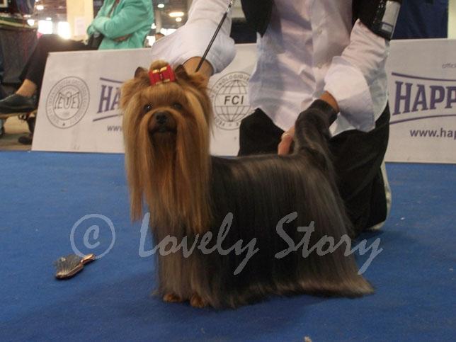 chiot elevage des poupons frises eleveur de chiens yorkshire terrier. Black Bedroom Furniture Sets. Home Design Ideas
