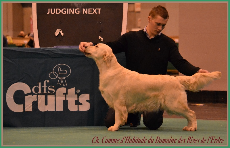 Les Golden Retriever de l'affixe of Best Diamond