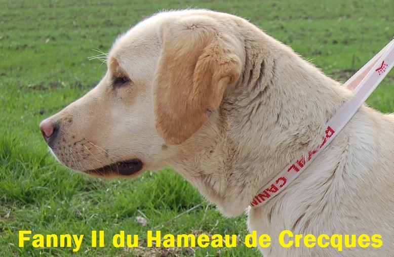 Les Labrador Retriever de l'affixe Des Etangs De La Douce Crême