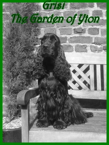 Grisi The Garden Of Yton
