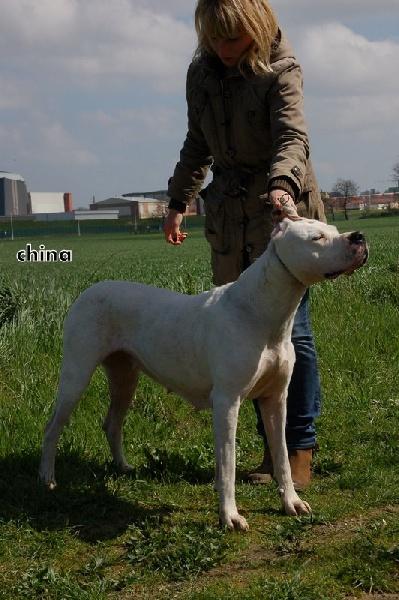 Les Dogo Argentino de l'affixe don Dogo de la Bahia Blanca