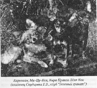 Russkiy Toy (Petit Chien Russe) - Mi tsu keya
