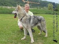 CH. Hermine-breizh de la compagnie du loup gris