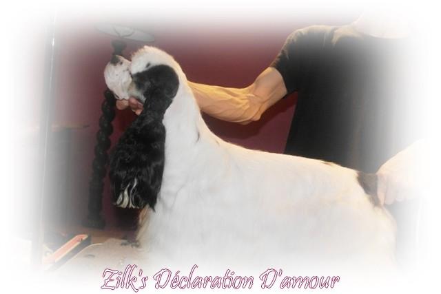 zilk's Déclaration d'amour