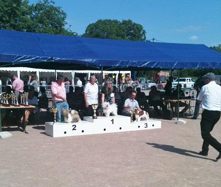 Le Standard de la race Bichon bolonais sur Atara.com