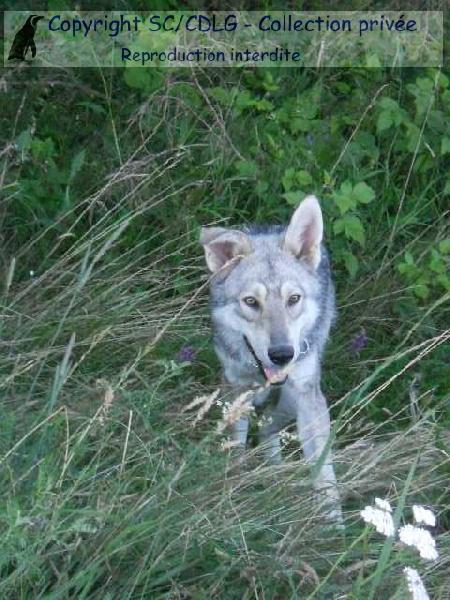 Hohkönigsburg de la compagnie du loup gris