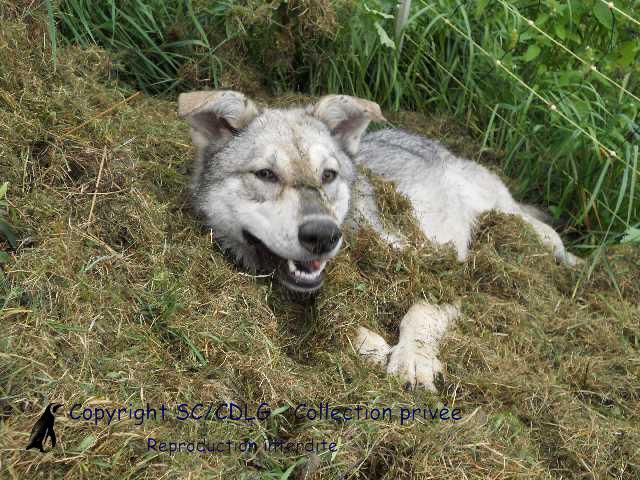 Honolulu de la compagnie du loup gris