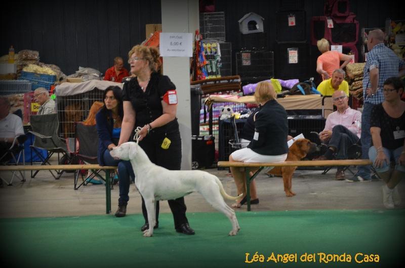Les Dogo Argentino de l'affixe Angel del Ronda Casa