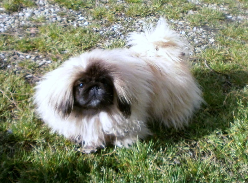 Hildegarde du jardin de vatsana chien de race toutes races for Jardin hildegarde