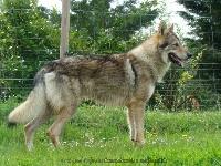 Chuck running wolf