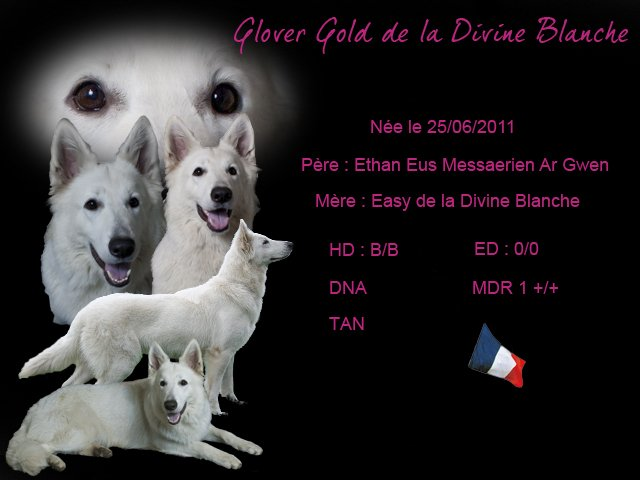 Les Berger Blanc Suisse de l'affixe of Easy White