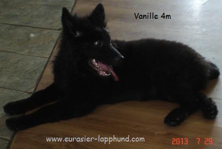 Eurasia Vanille n chocolat noir