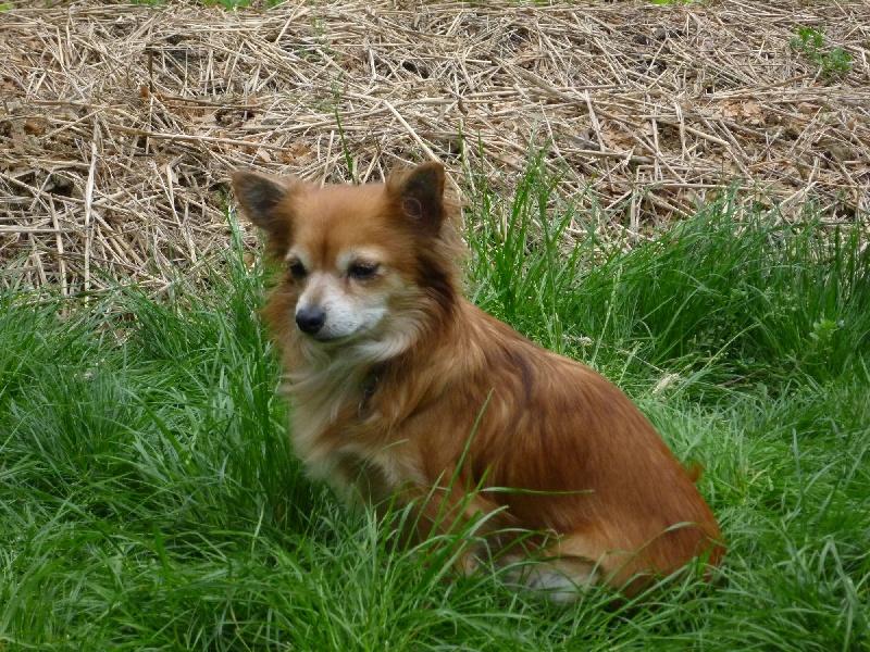 Les Chihuahua de l'affixe Of Feeling Rainbow