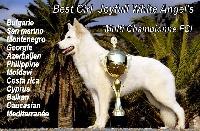 CH. Best girl joyfull white angel's