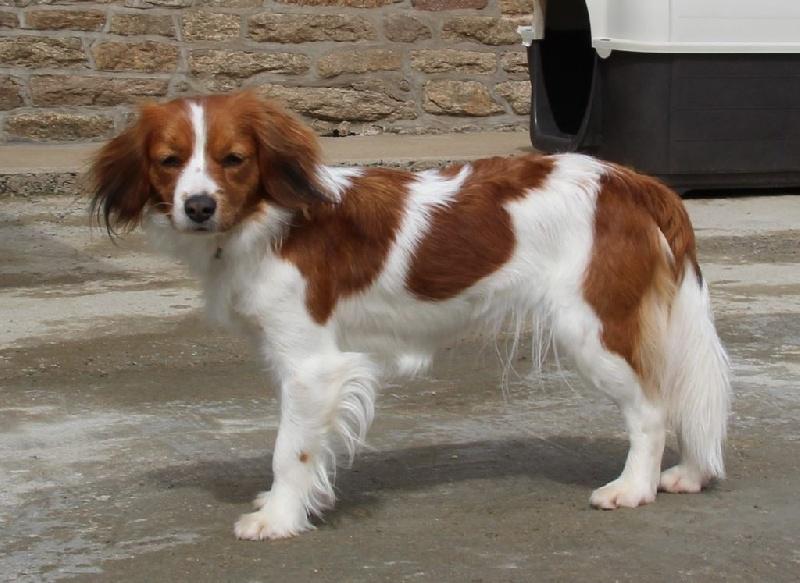 manusia's Britt-viona dite hyaline chien de race toutes