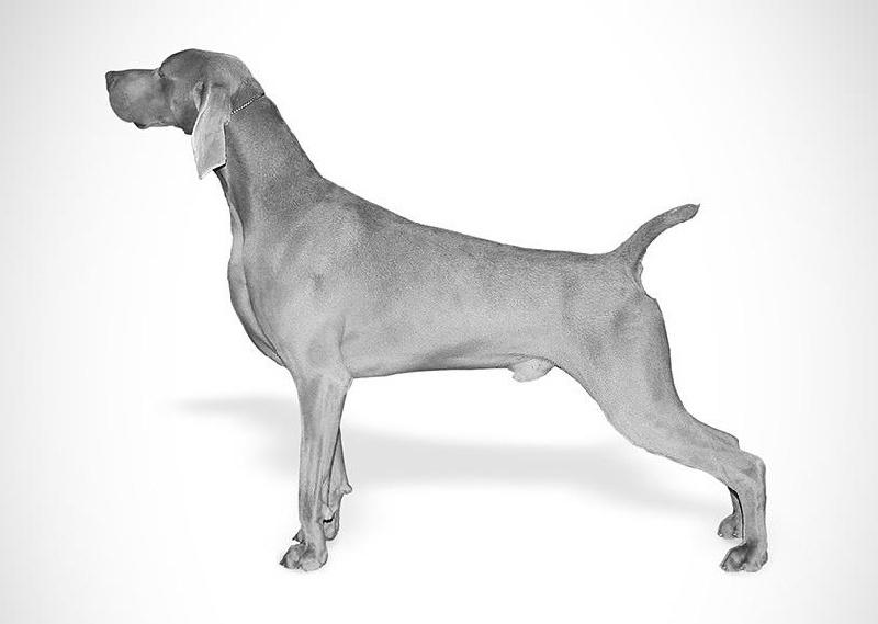 Ch umberto fala lovea chien de race toutes races en tous umberto fala lovea sciox Images