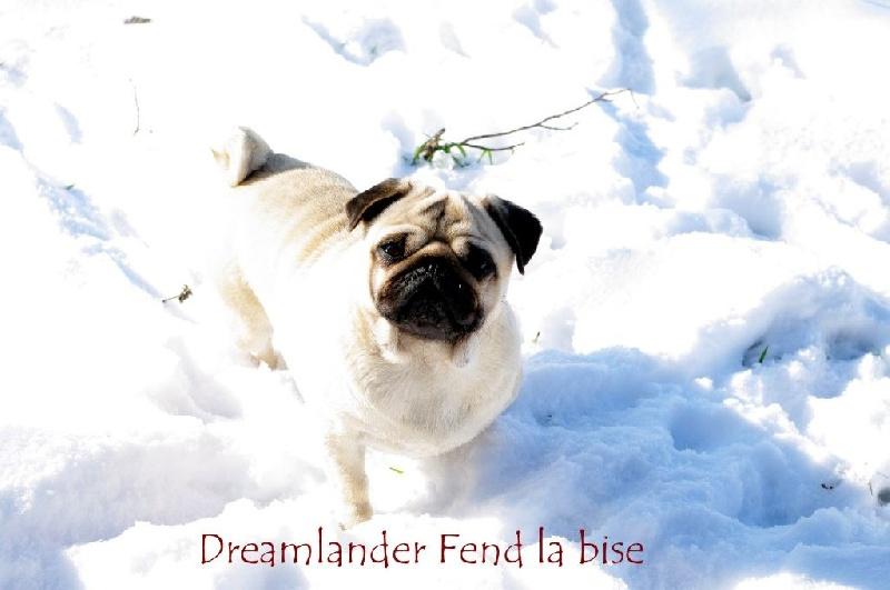 Les Carlin de l'affixe Dreamlander