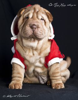 Shar Pei - Qi Ming Xing Sweet red wine