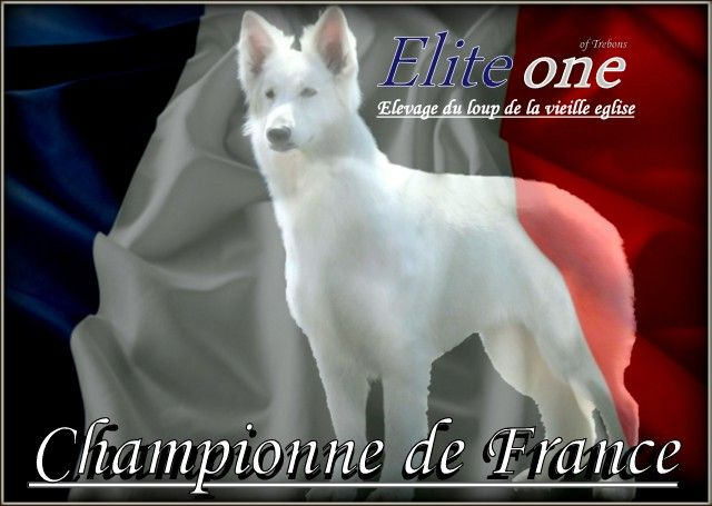 CH. Elite one of trebons berger blanc