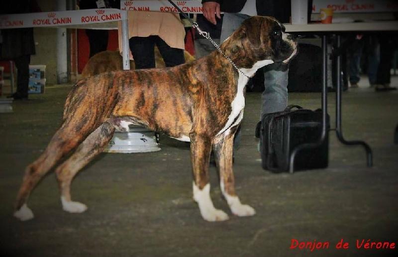 Ippon des jardins de passiflore chien de race toutes races for Boxer jardin de passiflore