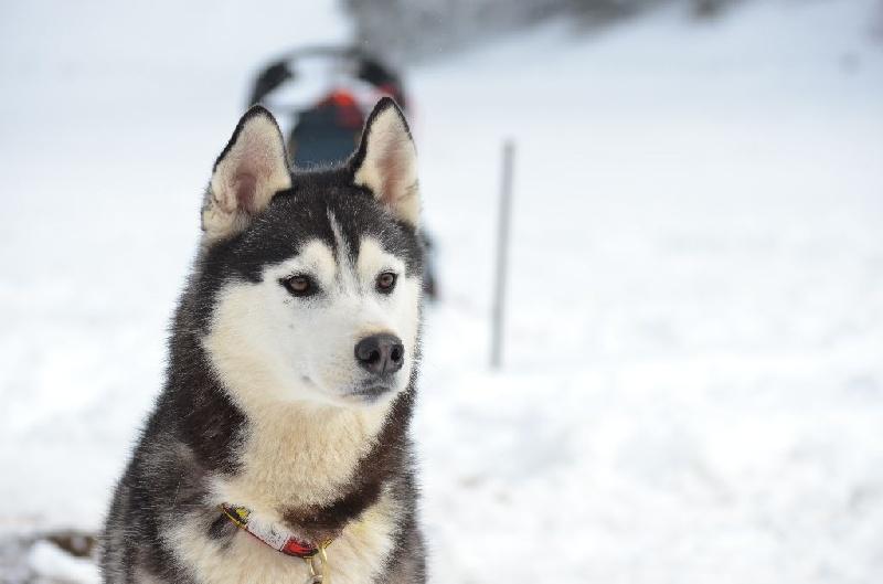 High velocity of Arctic Wolf Dream