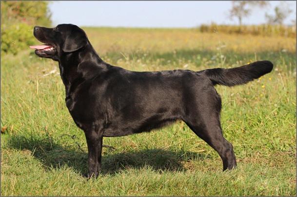 ch emma de la tour farmina chien de race toutes races en tous departements france inscrit sur. Black Bedroom Furniture Sets. Home Design Ideas