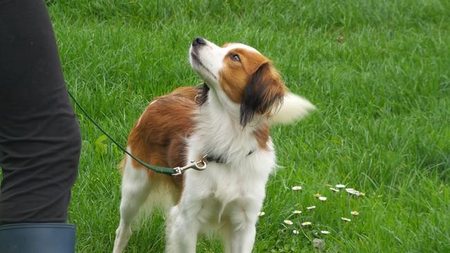 Kwanza van titi's nest chien de race toutes races en tous